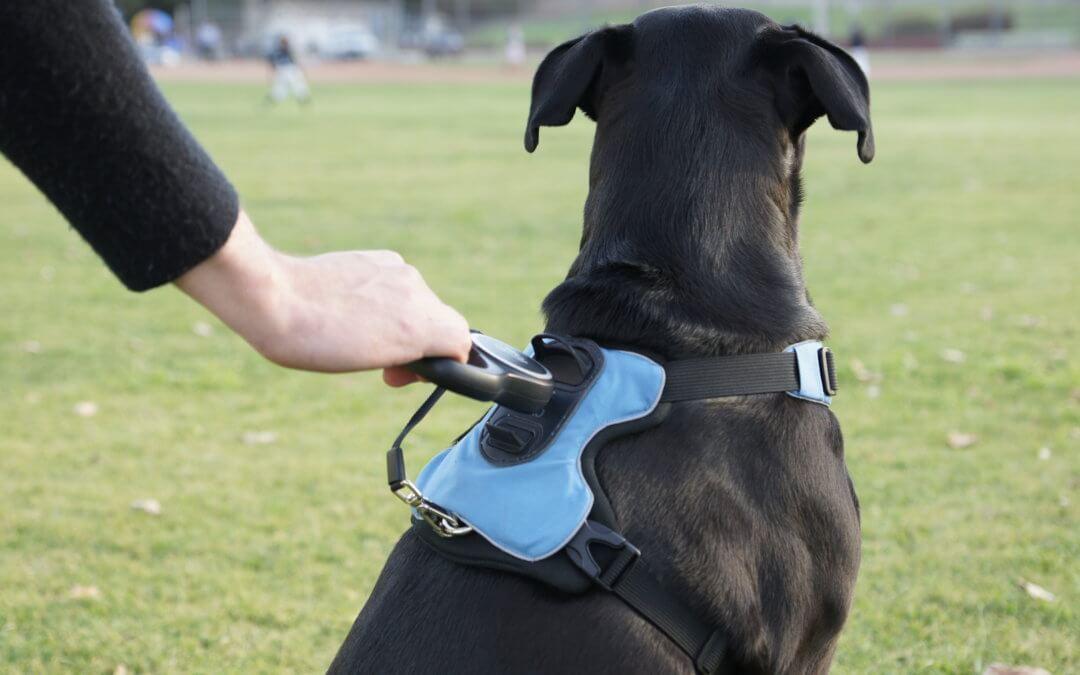 Rollo Pet Harness